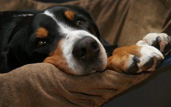 Gammal hund äter inte – Hjälp din hund vid aptitlöshet