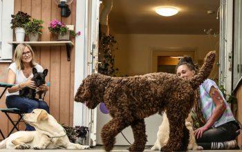 Hur många hundar får man ha på ett hunddagis?